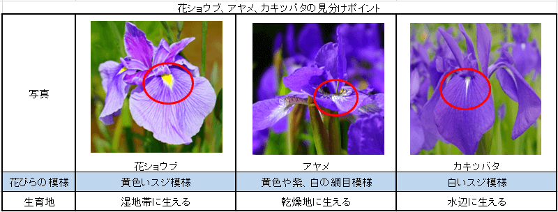 花ショウブ、アヤメ、カキツバタの見分け方表